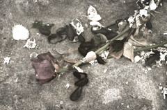 Love, discarded (edit 2) (rossbysmom) Tags: color beach rose digital textures detritus discarded flotsam washedup valentinesday oceangrovenj nikond7000 shadowhousecreations lovediscarded