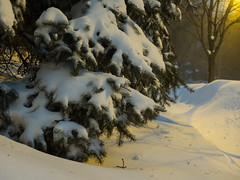 Juno drift (avatarsound) Tags: winter snow tree weather pine salem blizzard juno
