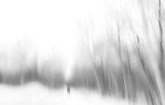 edwinloyolaNewYorkPortfolioReviewWinter01 (Edwin Loyola) Tags: autumn winter summer abstract fall nature seasons fineart fourseasons icm esl intentionalcameramovement edwinsloyola edwinloyola edwinloyolaphotography eslphotography