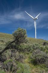 DSCF7159 (jiggumbob) Tags: power washingtonstate turbine windturbine sagebrush windpower windtower sagesteppe wildhorsewindandsolarfacility