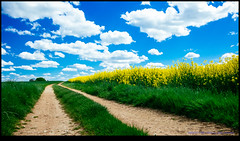 160427-7761-XM1.jpg (hopeless128) Tags: sky france clouds eurotrip fr rapeseed 2016 chassiecq aquitainelimousinpoitoucharentes aquitainelimousinpoitoucharen