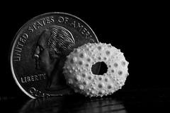 Macro Monday--smaller than a coin (dougwest403) Tags: sea macro shell urchin