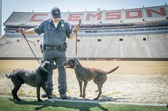 Service dogs (clemsonnews) Tags: bombsniffingdog servicedog clemsonuniversity policedog dog police policeofficer campuspolice deathvalley memorialstadium southcarolina kenscar