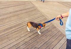 Asbury Park boardwalk with frightened dog-1 (Visual Thinking (by Terry McKenna)) Tags: ocean park grove nj shore jersey asbury
