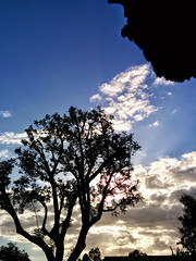 California Silhouette (mrtheTrain) Tags: california city travel blue trees light sunset sky tree beautiful beauty silhouette clouds
