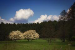 IMG_8951a (figoosia) Tags: landscape poland natura krzy chmury niebo podlasie podlachia