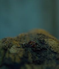 Little Worm (siinestesiia) Tags: nikon dirty worm dust gusano tierra pedra nikond5200
