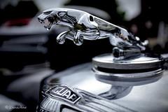 Jag (david.horst.7) Tags: auto car automobile mascot ornament jag jaguar