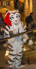 _DSC3502 (Acrufox) Tags: midwest furfest 2015 furry convention december hyatt regency ohare rosemont chicago illinois acrufox fursuit fursuiting mff2015