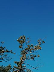 2015-09-28 10.41.18 1 (anastasiya_klenyaeva) Tags: sky nature yellow russia autmn     saratov vsco vscocam vscorussia vscosaratov