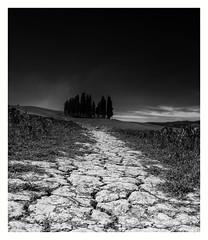 Photographer's Path (jfusion61) Tags: trees bw italy white black tree monochrome landscape nikon path cyprus val tuscany siena dorcia 2470mm d810