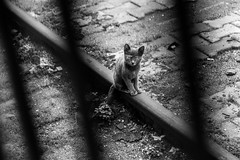 I am the one who is caged / Watching the human circus (zgr Grgey) Tags: bw lines station train cat nikon geometry istanbul diagonal rails d750 haydarpaa 2016 24120mm