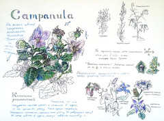 1564_2 ( ) Tags: flowers illustration ink watercolor botanical fountainpen 365 sketches platinum
