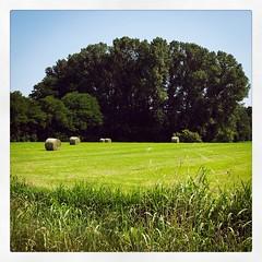 321/365 countryside #365 #365project #igersitalia #curacarpignano #provinciapavese #nature #field #grass #green #countryside (Lorenzo Tombola) Tags: 365 365project instagram square squareformat countryside grass green trees photooftheday x100s fuji fujifilm x100