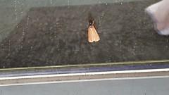 Photo of Strange moth