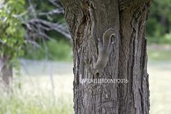 IMG_4609eFB (Kiwibrit - *Michelle*) Tags: tree grass birds woodpecker squirrel maine feeder chipmunk monmouth 2016 061916