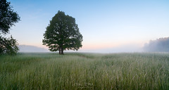 Landscape morning with fog (czdistagon.com) Tags: field fog tree spring summer meadow landscape morning season scenery nature outdoor sky countryside rural sunset colorful grass view scene silhouette country mist alone scenic plant one wood fresh natural dawn forest wallpaper sunlight fantastic panoramic foggy russia distagont2821