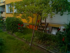CBS201606242100.jpg (timelapsephotos) Tags: temp test window timelapse view