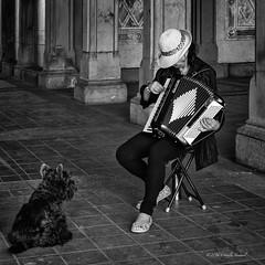 Serenade for a Dog (CVerwaal) Tags: nyc blackandwhite music usa ny newyork dogs centralpark bethesdaterrace sonyrx100iii weilixiao