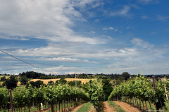 ER 160608 (18) (Paolo Bonassin) Tags: italy field vineyards rows campo emiliaromagna vigneti filari zolapredosa ponteronca ponteroncaviacarducci
