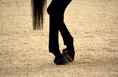 England 2016  London  Hoofs (Michiel2005) Tags: uk greatbritain england horse london unitedkingdom britain engeland changingoftheguard londen paard horseguards vk grootbrittanni verenigdkoninkrijk