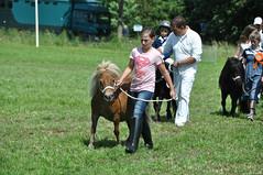 Zeeuwse dag van het Paard : 2016 (Omroep Zeeland) Tags: horse schouwenduiveland oosterland padmos dagvanhetpaard dvhp