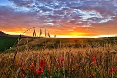 Colori della Val d'Orcia (binoguzzi) Tags: panorama colors sunrise landscape tramonto nuvole fuji campagna cielo tuscany fujifilm toscana valdorcia fujinon spighe xt10 xf1855