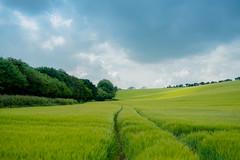 Track & Field (eXe-one) Tags: sky landscape field kent