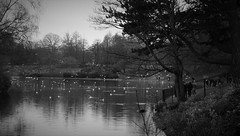 winter memories (vfrgk) Tags: park trees winter people blackandwhite bw lake water monochrome ducks serenity serene tranquil waterreflections
