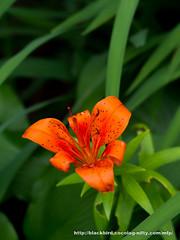 Flower #01 (osanpo) Tags: flower pen olympus ep5