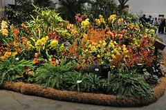 2016-03-11_0287n_waldor (lblanchard) Tags: orchid waldor displaygarden 2016flowershow
