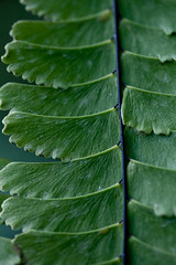 Aplat (Bloui) Tags: fern macro green march leaf botanicalgarden serres jardinbotanique 60mmmacro 2013 rebelxti