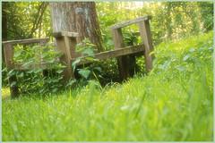 Springtime (12) (H. Bos) Tags: haven nature grass natuur elf fantasy gras lente springtime almere waterlandsebos kingoberonschair koningoberonsstoel
