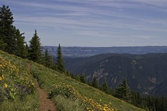Dog Mountain trail (ljgunn) Tags: columbiarivergorge dogmountain