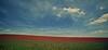 Poppy field (Hungmn) Tags: uk flowers red nature field countryside farm poppy poppies countrywalk poppyfield poppiesfield