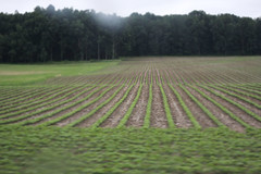 farming (Jwaan) Tags: green farm upstate growth rows centralnewyork fingerlakesregion