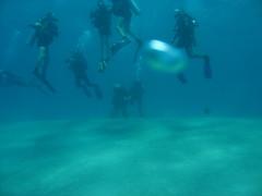 IMG_0440 (acmt2001) Tags: sea fish coral underwater  redsea scuba diving reef eilat aquasport