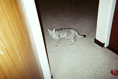 ( ourutopia) Tags: door house film home cat fuji superia taiwan fujifilm meow neko taipei miao 800 mew xtra fujicolor superiaxtra
