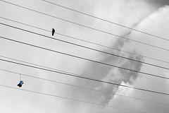 lost shoe (coolwings) Tags: bird colorsplash greyscale telephoneline