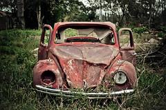 Abandono. (Tas S. Bordignon) Tags: brazil brasil carro rs riograndedosul fusca destrudo automvel cachoeiradosul