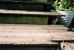 (cockatiella la) Tags: summer film cat workshop taipei 135      mjuii lomographygallerystore