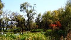 Still fall ! (Thomas.Gut) Tags: china tree canon landscape yunnan erhai wonderfulworld eos7d thephotographyblog