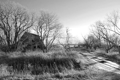Decay on the Prairies (Cindy's Here) Tags: old trees bw canada dead decay farm 45 manitoba oakbank prairielandscape ruralfarmland 52in2013