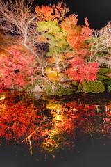 IMG_5304 (Thomo13) Tags: autumn trees red colour fall leaves japan canon eos gold kyoto mark ii 5d momoji