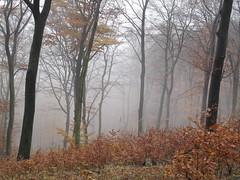 IMG_16 (Beba <~~~) Tags: wald bielefeld teutoburgerwald teuto hnenburg