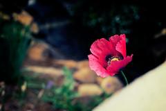 State Botanical Garden Of Georgia (Brent Betz) Tags: flowers shadow red summer plants sunlight leaves yellow gardens petals spring purple bokeh blossoms shade blooms vignette statebotanicalgardenofgeorgia