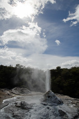 Lady Knox geyser, Wai-O-Tapu (Spannarama) Tags: trees newzealand water fence colours rotorua steam hills nz minerals waikato blueskies geyser geothermal thermal waiotapu ladyknox thermalwonderland