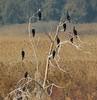 Hula Nature Reserve  שמורת טבע חולה