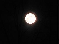 Two Moon (Art of E) Tags: two moon vegetation darkened artofe