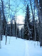 Cross Conservancy Snowshoe - Heading back from Stewart Barn 1 (benlarhome) Tags: winter snow canada cold calgary ice trekking trek snowshoe rockies hike alberta rockymountain snowshoehike crossconservancy